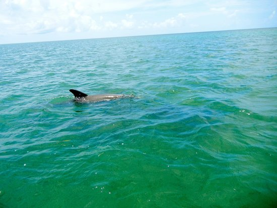 Take Me There Charters : Dolphin sighting
