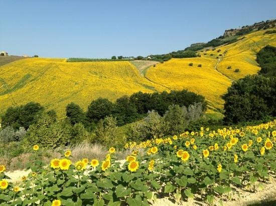 Agriturismo La Campana: il panorama