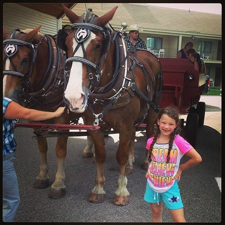 Fox Ridge Resort: Carriage Rides