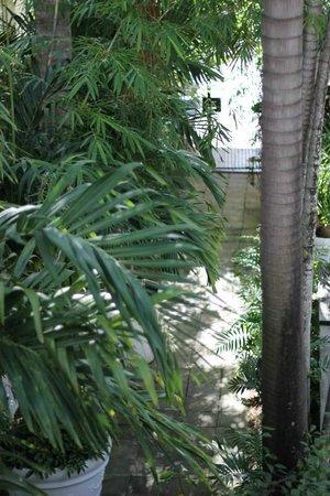 Sobe You Bed and Breakfast: vegetation