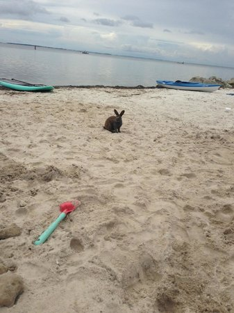 Black's Island Vacation Resort: Beach Bunny