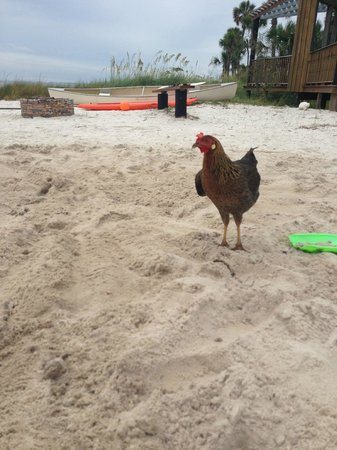 Black's Island Vacation Resort: Beach Rooster