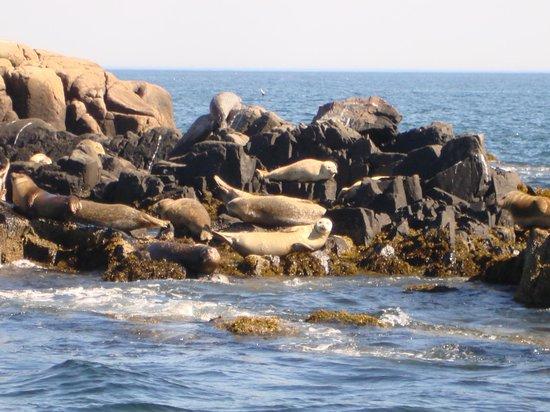 Island Cruises : seals