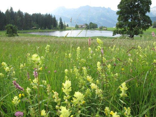 Hotel Stump's Alpenrose: Herrliche Natur