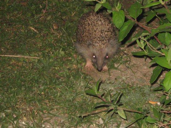 Mitsis Rodos Maris Resort & Spa: Mr Hedgehog