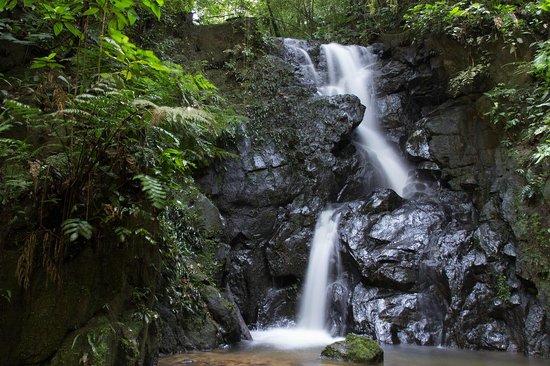 Tapirai: Caminhadas para cachoeiras na mata
