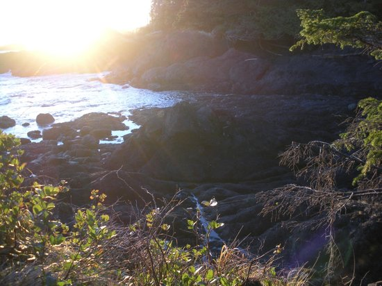 Sea Star Beach Retreat: Wild Pasific Trail