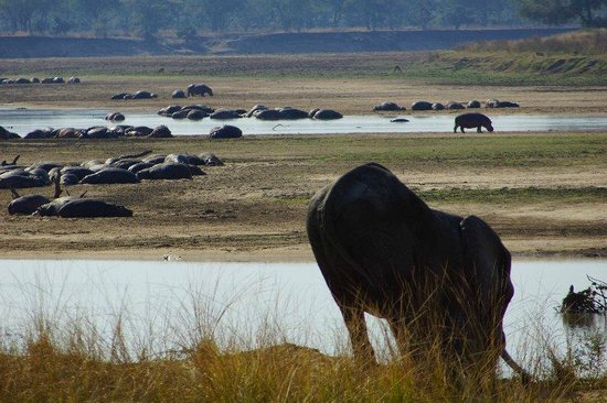 Kakuli Bush Camp - Norman Carr Safaris : Elephant leaving grounds, hippo filled Luongwa for the background