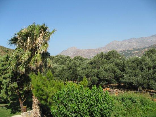 Hotel Irida Plakias: Blick in den Garten und die umliegenden Berge