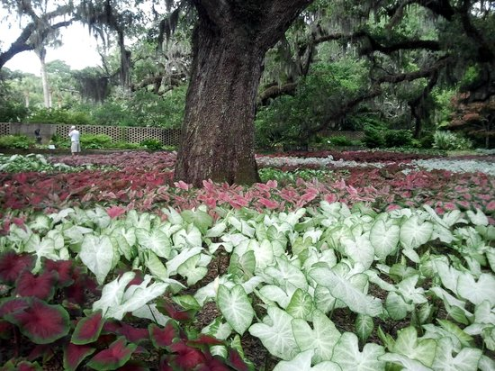 Brookgreen Gardens Murrells Inlet All You Need To Know