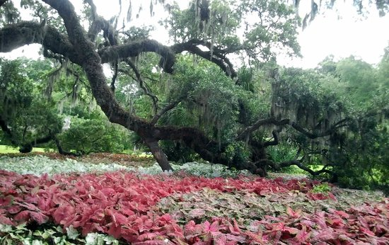 Brookgreen Gardens Murrells Inlet 2018 All You Need To