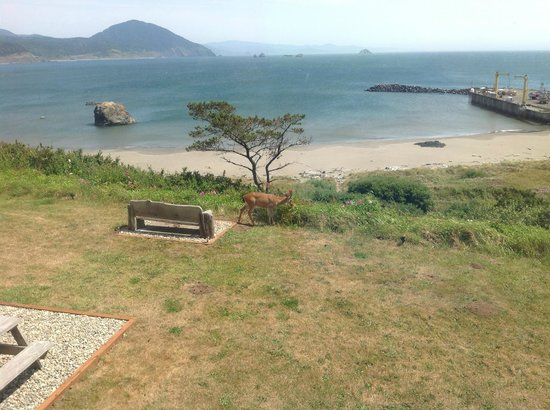 Castaway By the Sea: Deer on lawn, harbor to the right