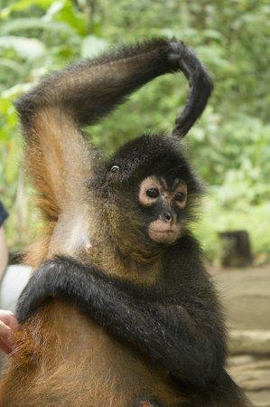 Casa Bambu Resort: Wildlife sanctuary/gulfo dulce tour