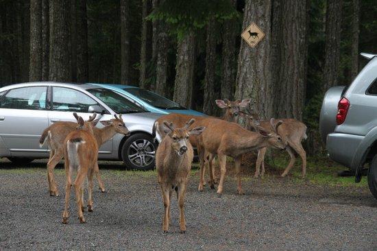 Wildwood Manor Bed and Breakfast: Deer crossing