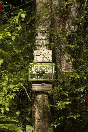 Casa Bambu Resort: The road to the houses