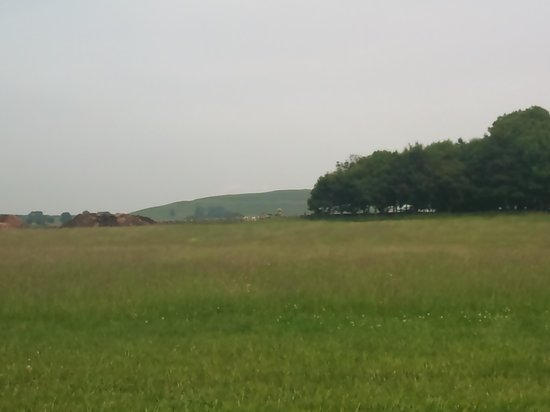 Shallow Grange Farm Campsite : Random Sheep in a neighbouring field staring at us!