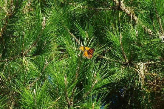 Monarch Grove Sanctuary: Butterflies