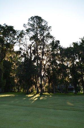Ocala National Golf Club: Sunrise through the trees.