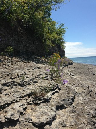 Point Petre Wildlife Conservation Area
