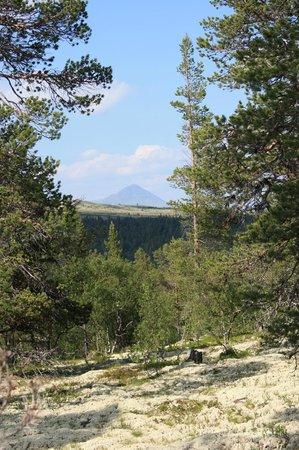Valles del Este, Noruega: View to Rondane NP