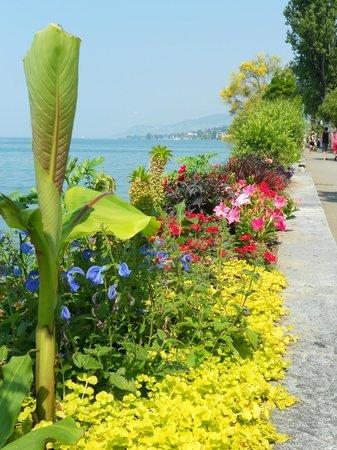 Golf-Hotel Rene Capt: Flower displays along lake Geneva