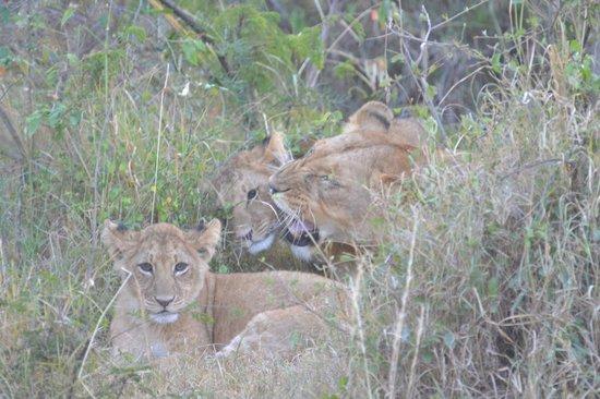 Porini Mara Camp: Children welcome but need supervision :-)