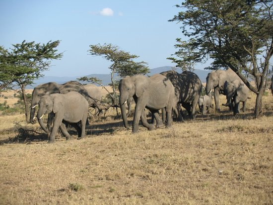 Porini Mara Camp: Traffic was sporadic