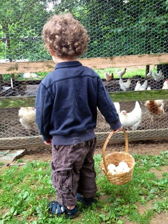 Olde Fogie Farm : Collecting eggs at morning chores