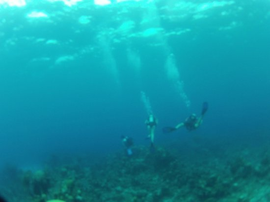 Tiamo Resort: Reef Diving