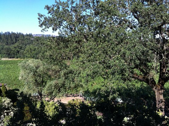The Wine Country Inn: View from Room 19