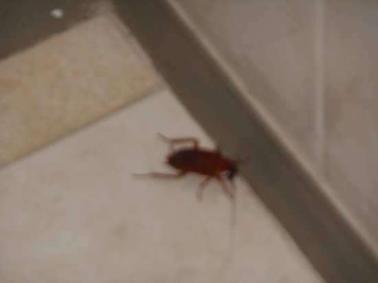 Fontane Bianche, Italia: scarafaggi in bagno