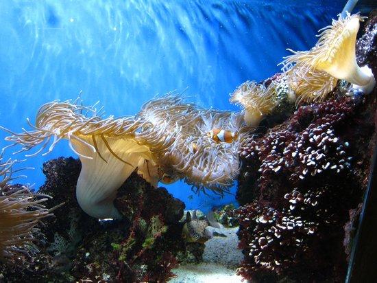 Clownfish Picture Of Aquarium Of Niagara Niagara Falls