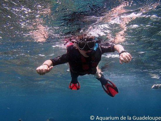 Seatour - Aquarium de Guadeloupe: Amarin en mode requin