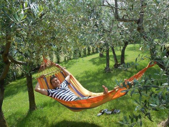 La Compagnia del Chianti: Garden with olive threes
