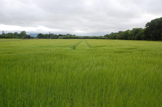 Bayly Farm: Walking around the farm.