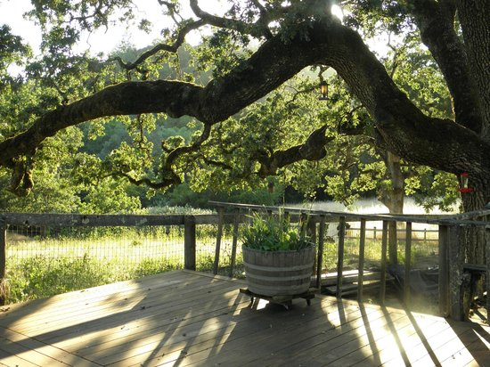 Kenwood Oaks Guest House : Many beautiful oak trees.