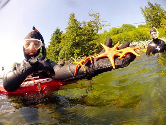 A Group Of Sea Stars Picture Of Snorkel Alaska