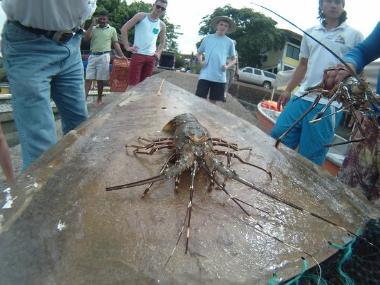 Explora Ya Eco-Tours & Adventure Travel Day Trips: Lobster at Boca Chica