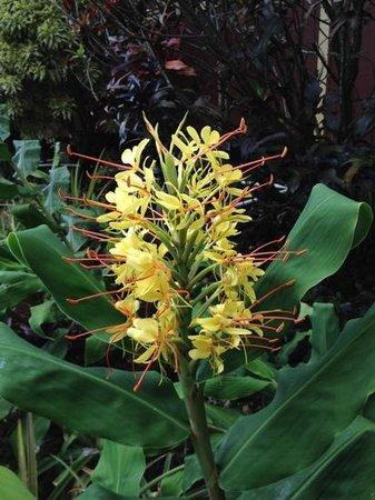 Paleaku Gardens Peace Sanctuary: beautiful flowers