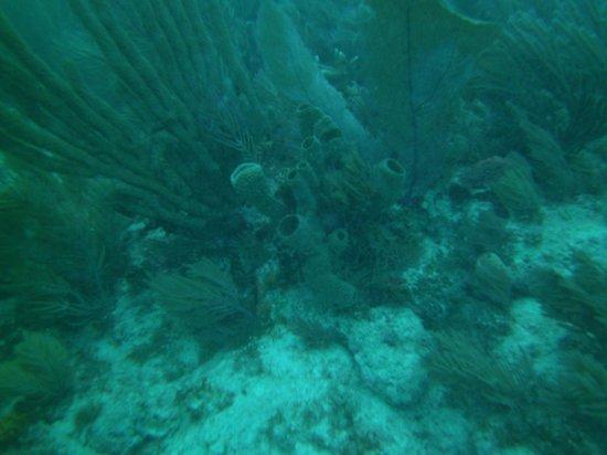 Silent World Dive Center: John Pennekamp Reef