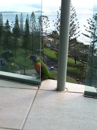 Malibu Mooloolaba Holiday Apartments: morning visitor