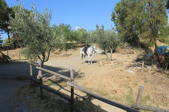 Sicily Horse Tours: Jhonny Jumper