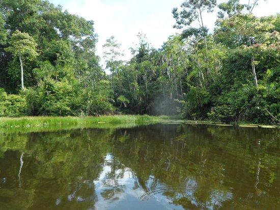 Reserva Natural Marasha: The lagoon viewed from a canoe.