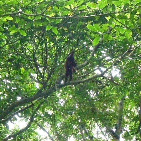 Villa Maria Tayrona - a Kali Hotel: Mico monkey