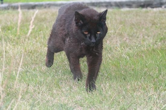 The Inn At Block Island : resident feline