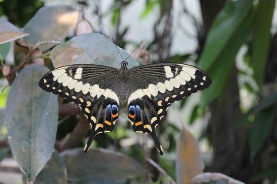 Papiliorama, Kerzers