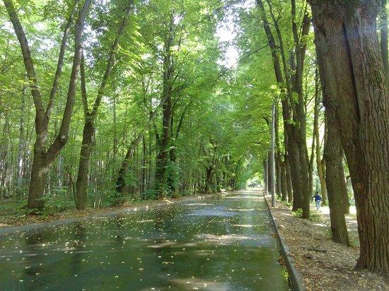 Sokolniki Park: Bike path in Sokolniki