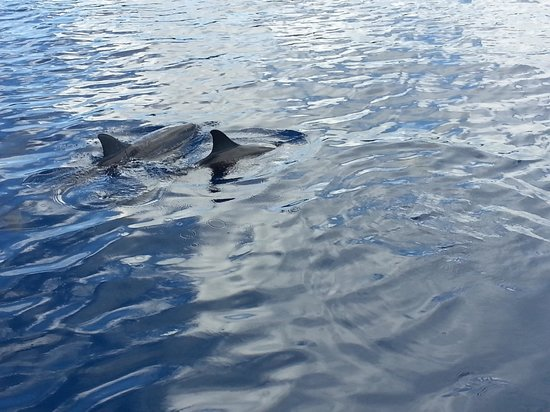 Isla Cocos, Mariana Islands: dolphin watching cocos island