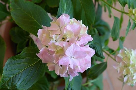 Residence Bartolini Ai Campi da Golf: giardinetto fiorito