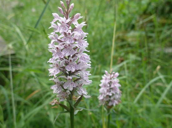 The Blacksmith's House: Wild Orchids